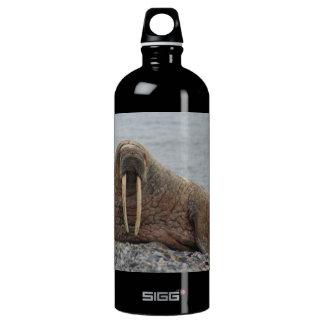 Large Walrus on Rocks Aluminum Water Bottle