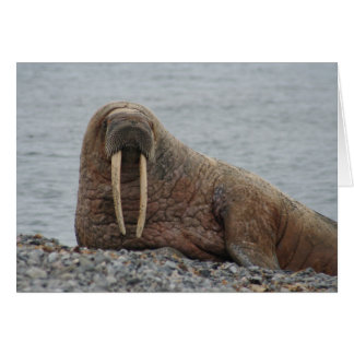 Large Walrus on Rocks Card