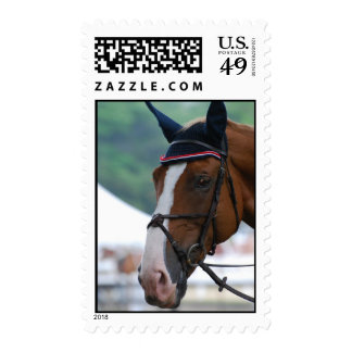 Large Warmblood Horse Postage Stamp