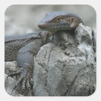 Large Water Monitor Lizard Square Sticker