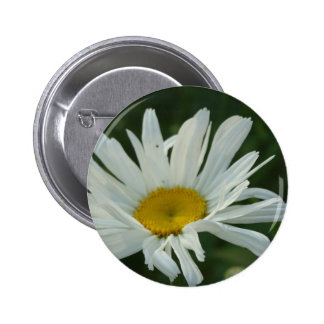 Large White and yellow Daisy Aster flowers 2 Inch Round Button