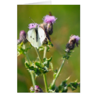 Large White Butterfly on Thistles Card