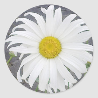 Large White Daisy Sticker