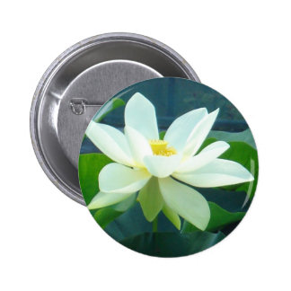 large white lily button