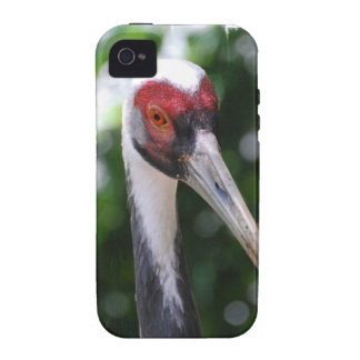 Large White Naped Crane iPhone 4 Cover