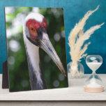 Large White Naped Crane Photo Plaques