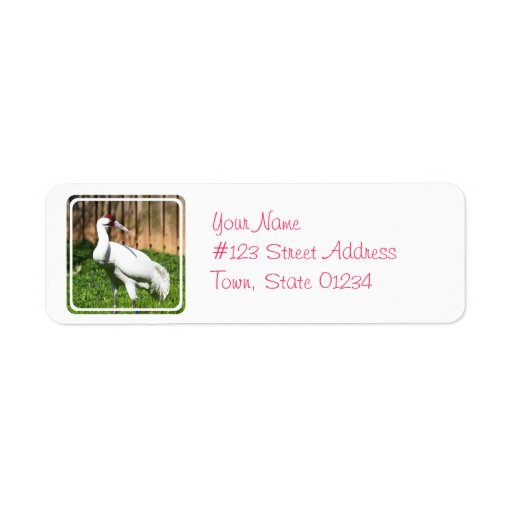 Large Whooping Crane Return Address Labels