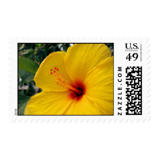 Large Yellow Hibiscus Postage Stamps