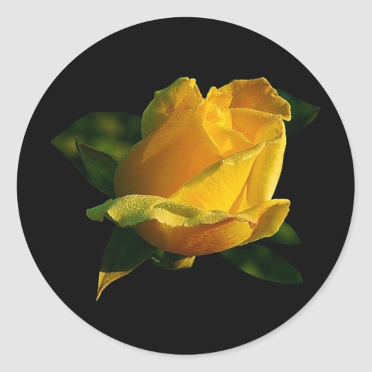 Large Yellow Rose Classic Round Sticker