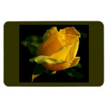 Large Yellow Rose Magnet at Zazzle