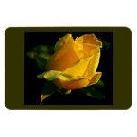 Large Yellow Rose Rectangular Photo Magnet