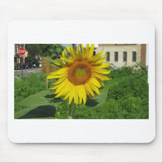 Large Yellow Sunflower Photo Mouse Pad