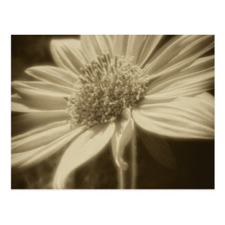 Large Yellow Wildflowers 2 Antiqued Postcard
