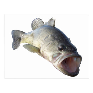 Largemouth Bass fish Postcard