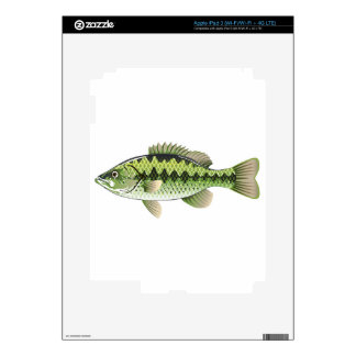 Largemouth Spotted Green American Bass Vector iPad 3 Decals