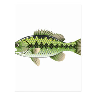 Largemouth Spotted Green American Bass Vector Postcard