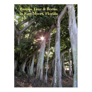 Largest Banyan tree Fort Myers Florida Postcard