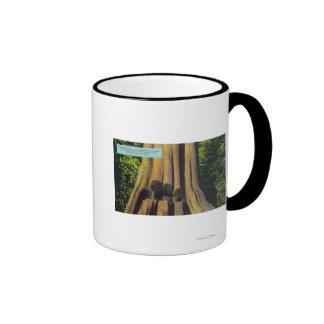 Largest Recorded Tree in BC 1896 Cedar Tree Ringer Mug