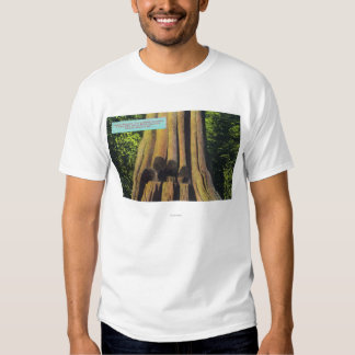 Largest Recorded Tree in BC 1896 Cedar Tree T Shirt