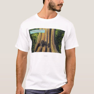 Largest Recorded Tree in BC 1896 Cedar Tree T-Shirt
