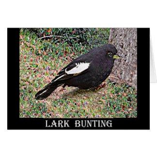 Lark Bunting (Colorado) Card