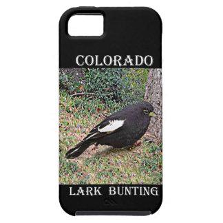Lark Bunting (Colorado) iPhone SE/5/5s Case