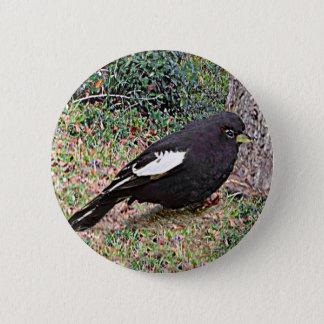Lark Bunting (Colorado) Pinback Button