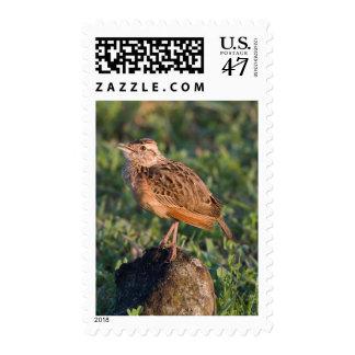 Lark, Ngorongoro Conservation Area, Arusha Postage Stamp