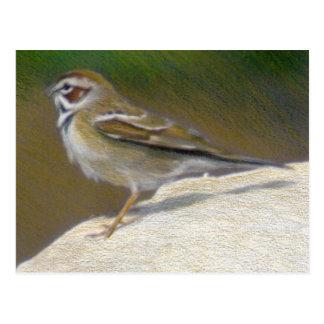 Lark Sparrow Fine Art Nature Postcard