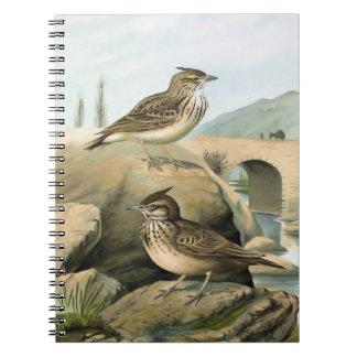 Larks Vintage Bird Illustration Spiral Note Books