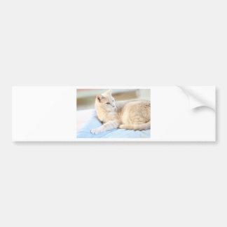 Larry Bumper Sticker