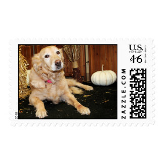 Larry - Golden Retriever - Photo-2 Postage Stamps