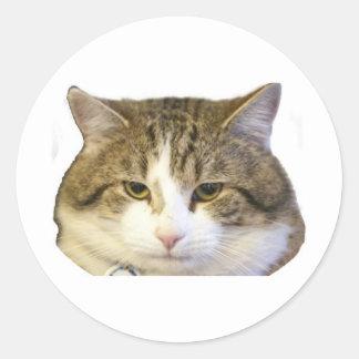 Larry la cara del gato del Downing Street Pegatina Redonda