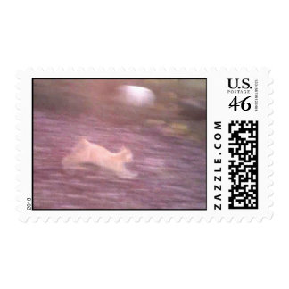 Larry the Cat running like a Cougar Postage Stamp