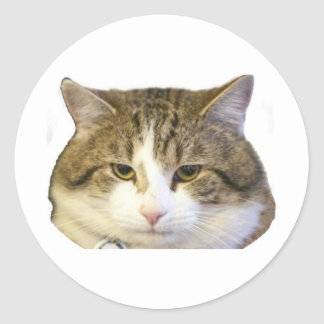 Larry the Downing Street Cat Face Classic Round Sticker