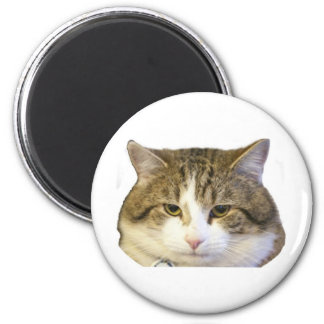 Larry the Downing Street Cat Face Magnet