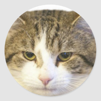 Larry the Downing Street Cat Face Round Stickers