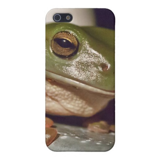 Larry the Laconic Tree Frog Covers For iPhone 5