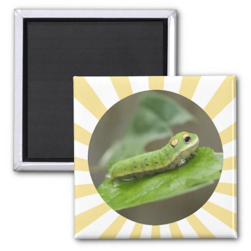 Larva de Caterpillar de la mariposa Imanes