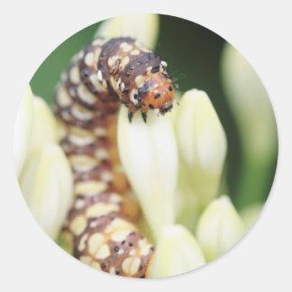 Larvas de Caterpillar de la mariposa del Pegatina Redonda