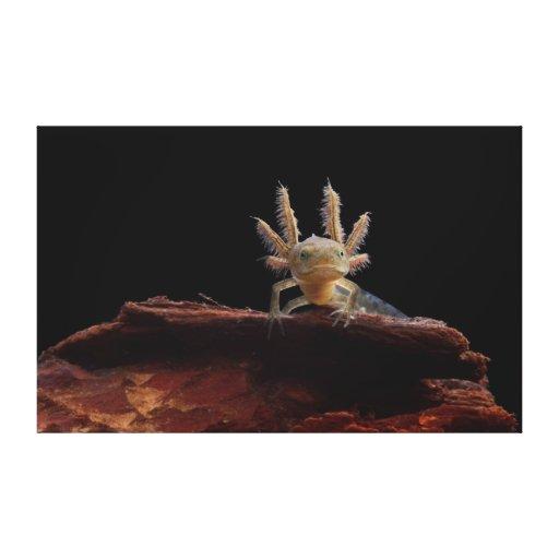 Larve con cresta del newt impresiones en lienzo estiradas