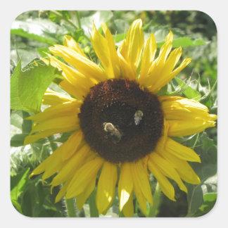 Las abejas del girasol y de la miel manosean colcomanias cuadradas personalizadas