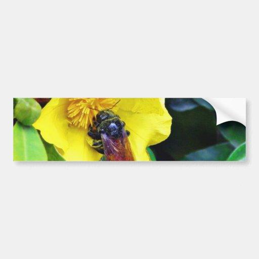 Las abejas en amarillo florecen el polen etiqueta de parachoque