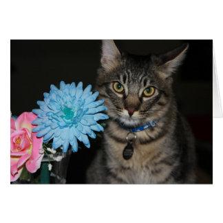 Las actitudes del gato de Kimber consiguen la Tarjeta De Felicitación