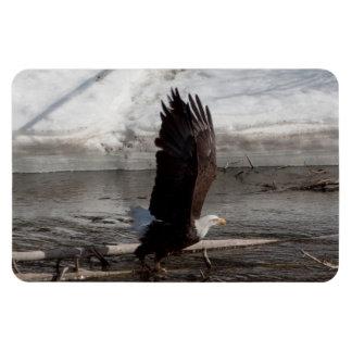 Las alas ampliaron Eagle calvo Iman Rectangular