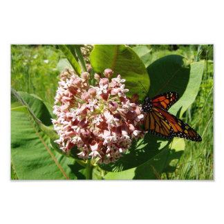 Las alas de la mariposa de monarca se abren en la  fotografía
