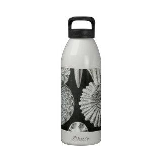 Las amonitas de Ernst Haeckel Botella De Agua