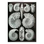 Las amonitas de Ernst Haeckel Felicitacion