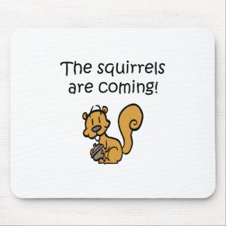 Las ardillas son diseño divertido que viene alfombrilla de ratón