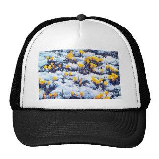 Las azafranes amarillas en la nieve, colina del pa gorra